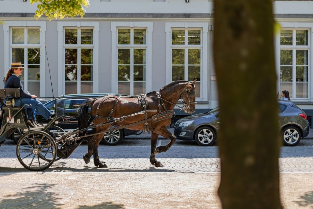 coach, horse, horse-drawn carriage